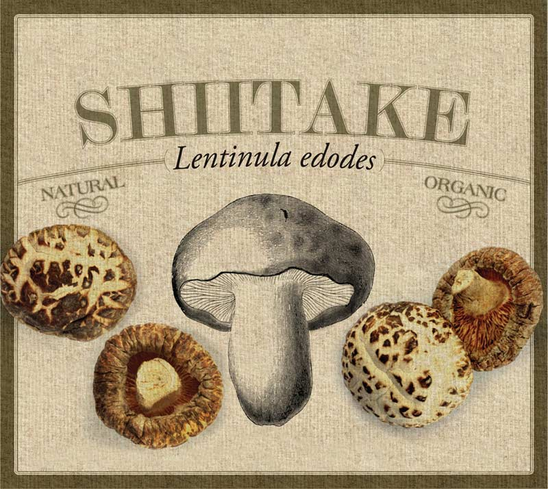 Shiitake-Card