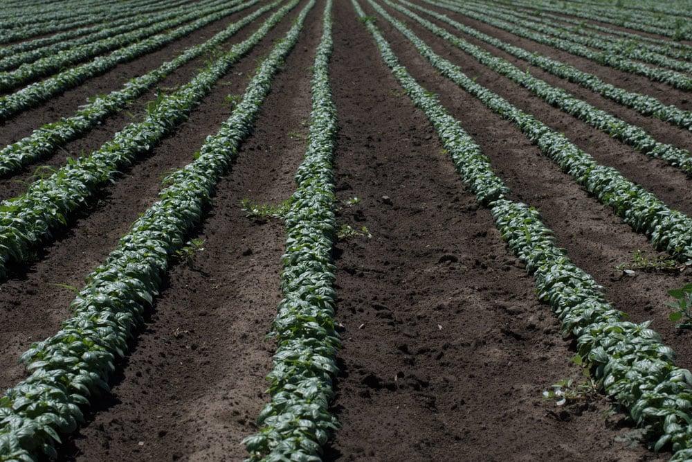 Northwest Summer Crop Report