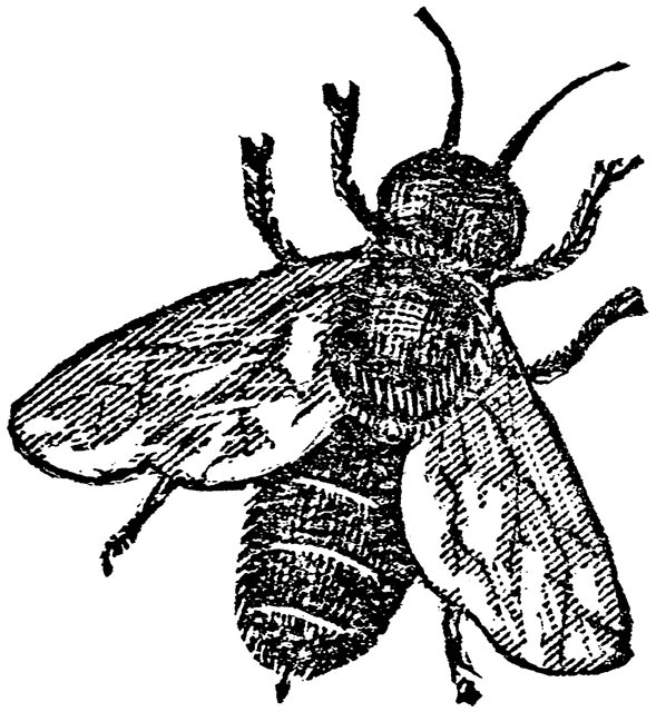 bee_18841_md