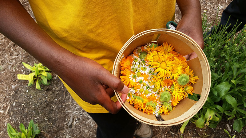 Teen holding basket of calendula and other flowers