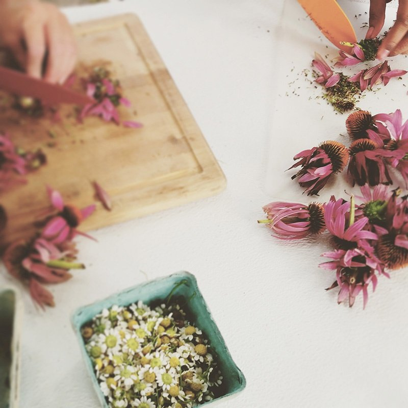 Chamomile flowers in berry carton and echinacea flowers on table and wooden cutting board