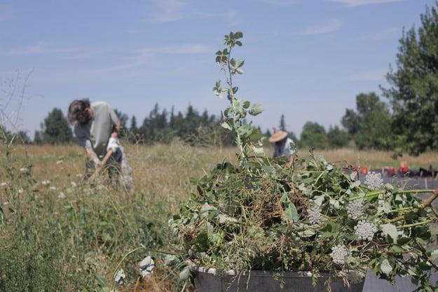 Mountain Rose Herbs - Butterfly Meadow Restoration