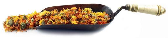 Trowel full of dried calendula blossoms