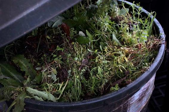 Mountain Rose Herbs - A Peak Inside Facilities