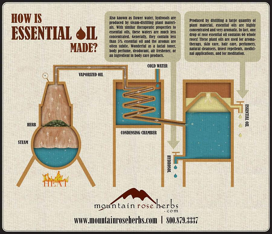 How Essential Oils Are Made Infographic