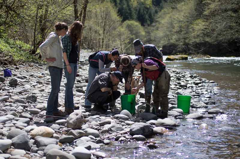 Group of Mountain Rose Herbs Volunteers Observing Salmon