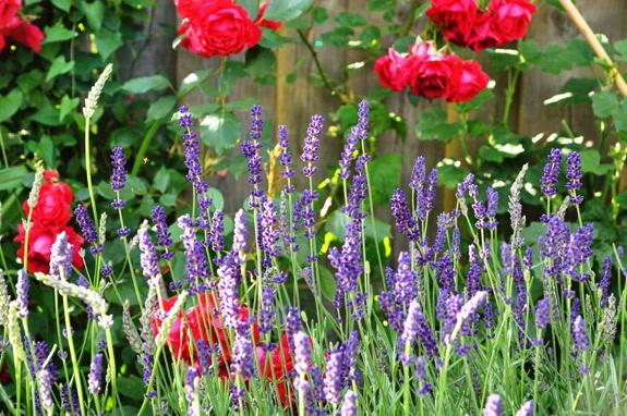 Gardening Tea Recipe