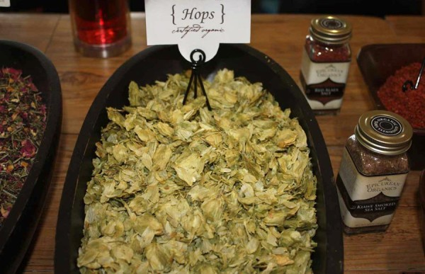 Organic Hops from Mountain Rose Herbs
