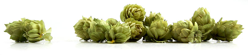 New Video: Hops Medicine with Susun Weed