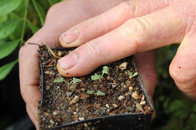 Grow an Herb Garden: How to Start Seeds