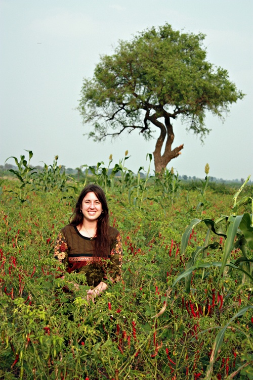 Organic Chili Peppers now certified Fair Trade!