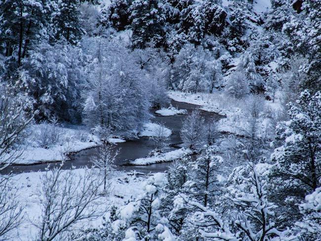 Forest Winter Scene