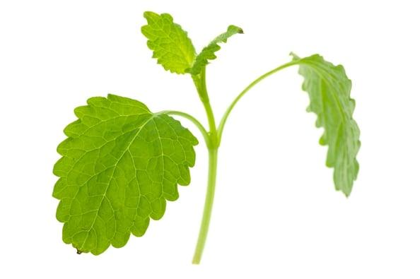 How to Use 8 Pesky Weeds