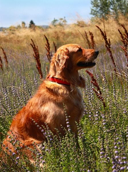 Natural Pet Care: Calming Dog Treats Recipe