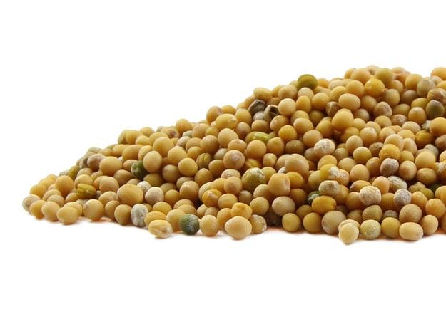 mustard-seed-yellow