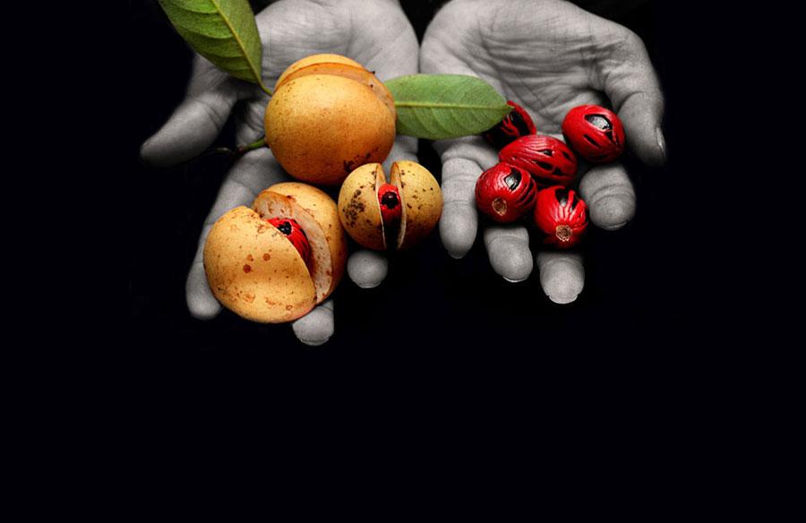 Fair Trade Nutmeg & Mace