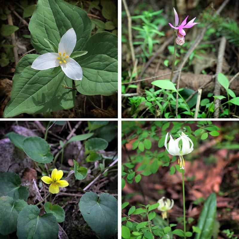 nwwildflowers
