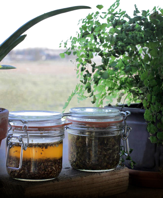 Herbs solar infusing on the window sill