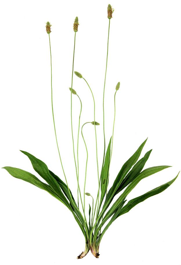 Understanding & Identifying Basic Herbal Actions
