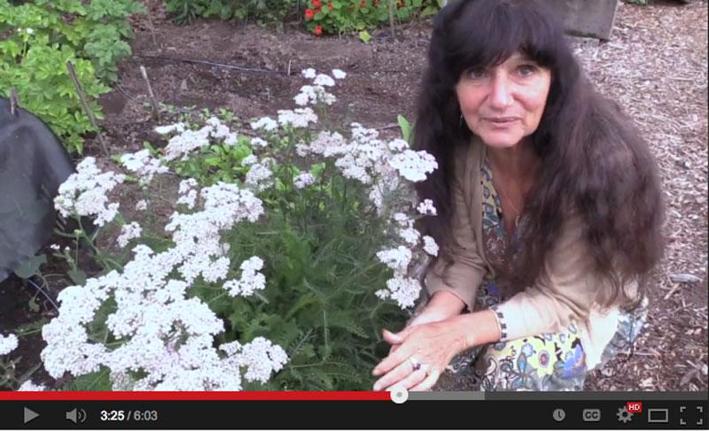 Video: Rosemary Gladstar's Garden Wisdoms - Yarrow