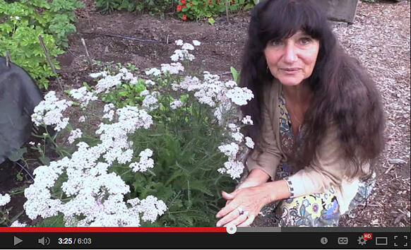 Video: Rosemary Gladstar's Garden Wisdoms - Yarrow