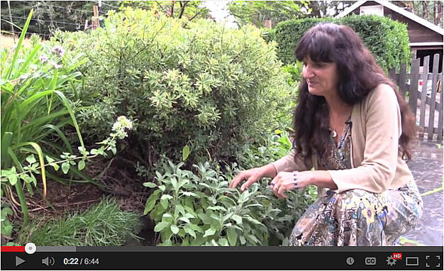 New Video: Sage & Thyme with Rosemary Gladstar
