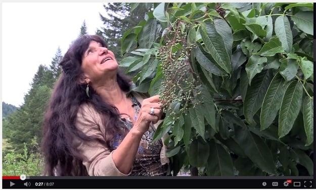 VIDEO: Rosemary Gladstar's Garden Wisdoms - Elderberry Medicine