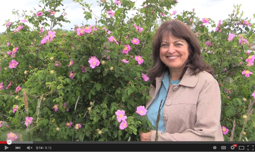 VIDEO: Aromatherapy Basics: Rose Medicine