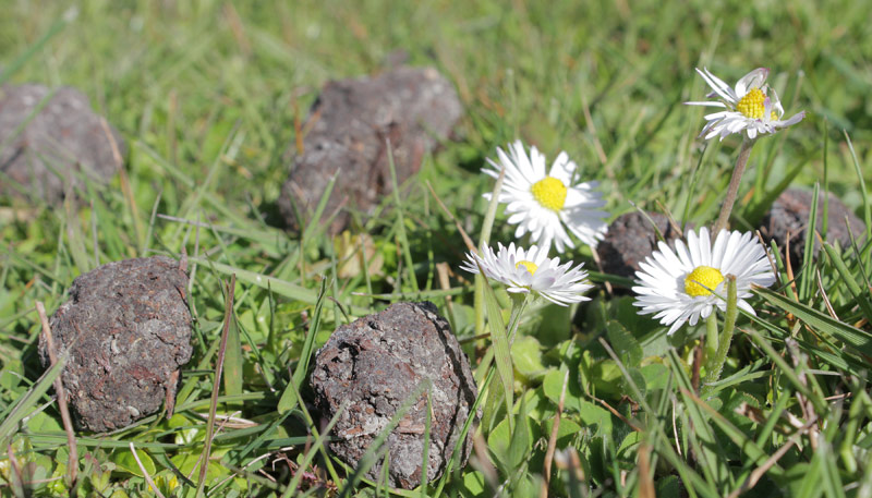 Seed Bombs in Grass