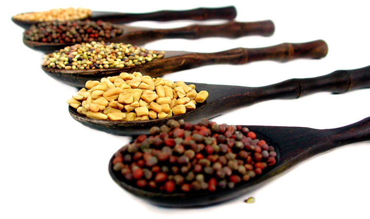 Wooden spoons holding various types of sprouting seeds.