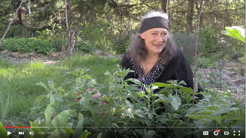 New Video: Artemisia Medicine with Susun Weed