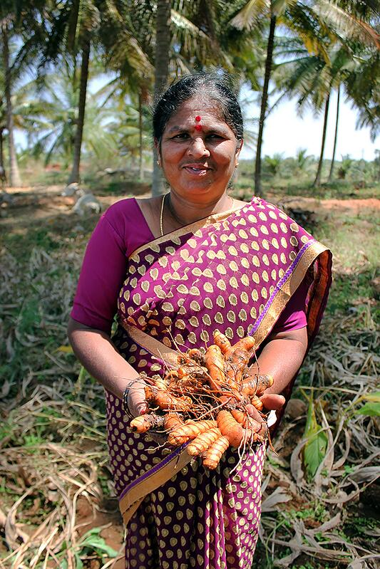 Woman in India holding fresh turmeric root.