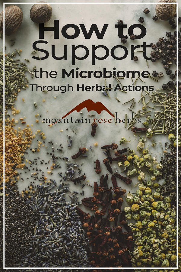 Link to Pinterest- How to Support the Microbiome through Herbal Actions