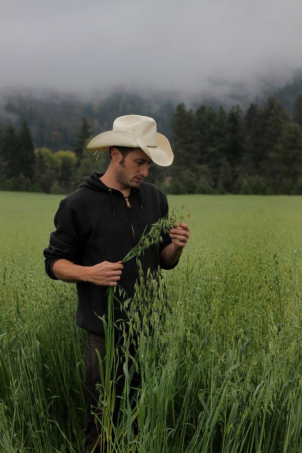 Farmer with milky oat tops
