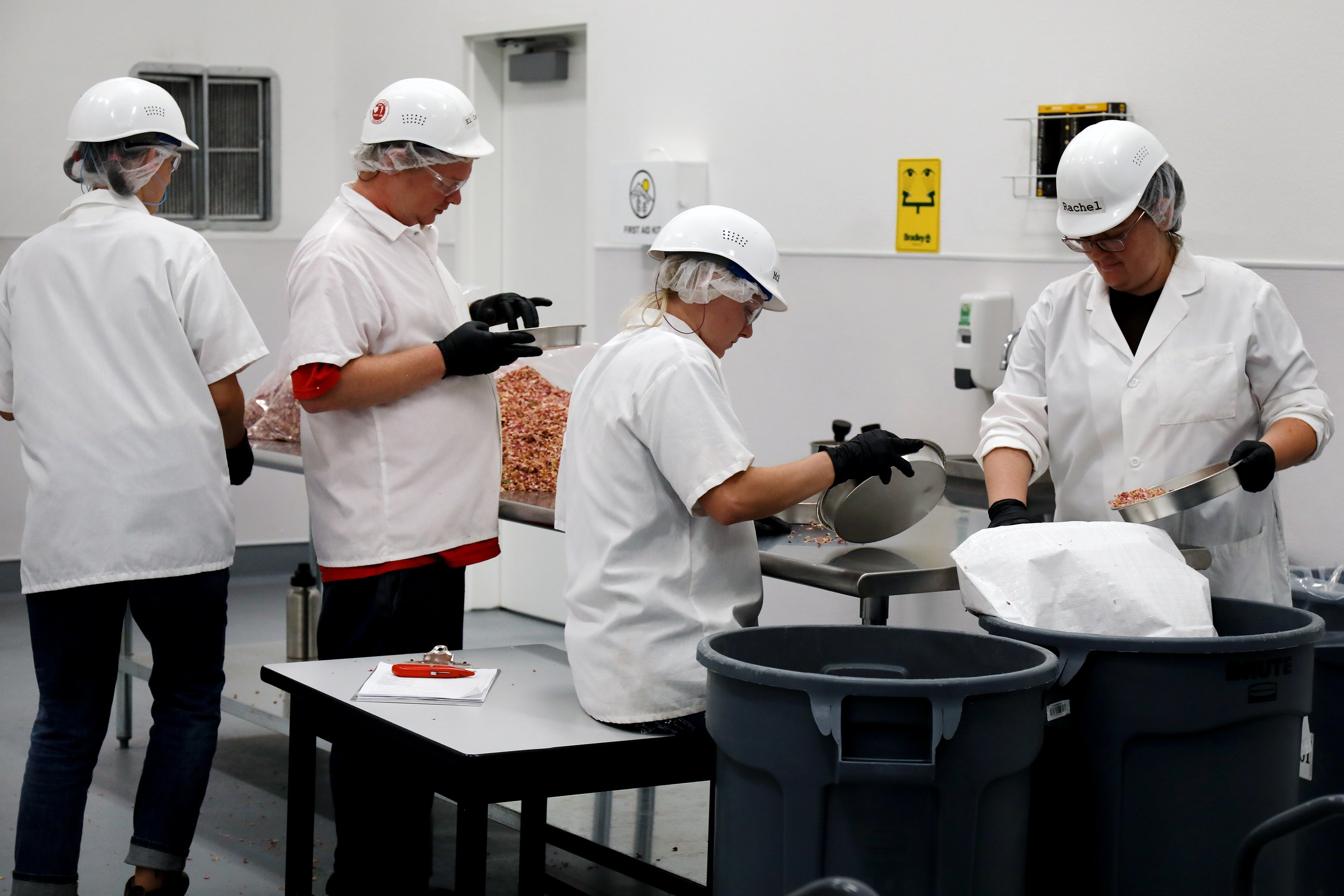 Workers handling herbs with hard hats on and lab coats.