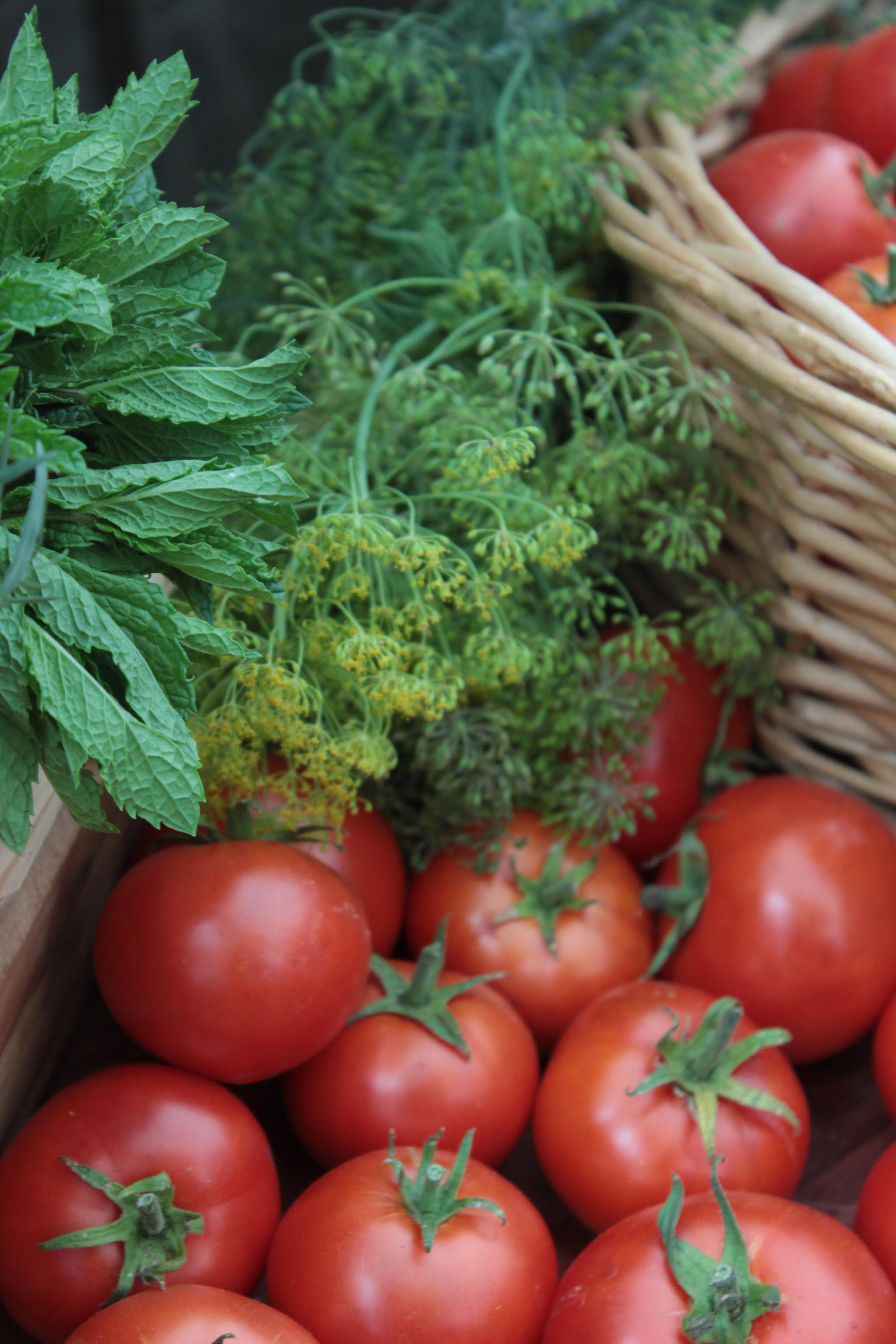 Fresh mint leaves, fresh fennel sprigs, and fresh red tomatoes in wicker baskets at farmers markets
