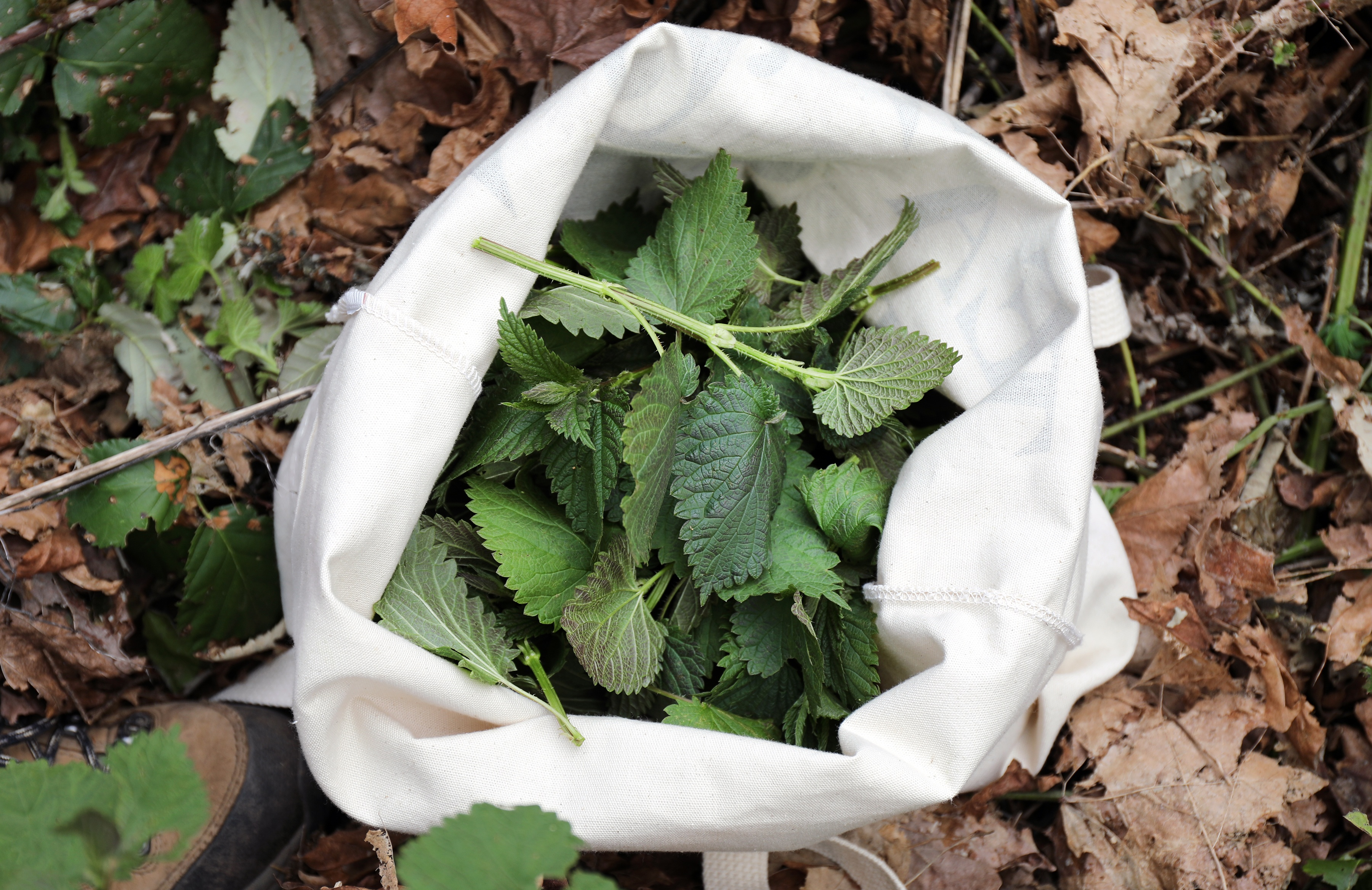 Canvas tote bag filled with nettle leaves sitting in forest ground