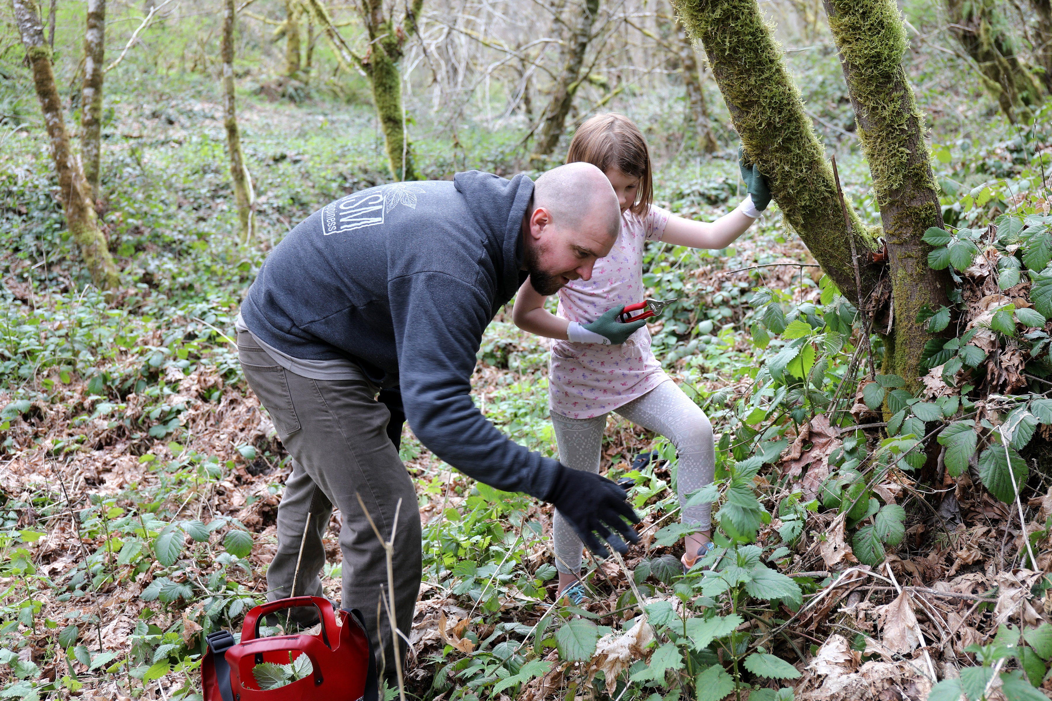 Our employee Mason shows his daughter how to harvest stinging nettle without getting stung in the woods near Eugene, Oregon