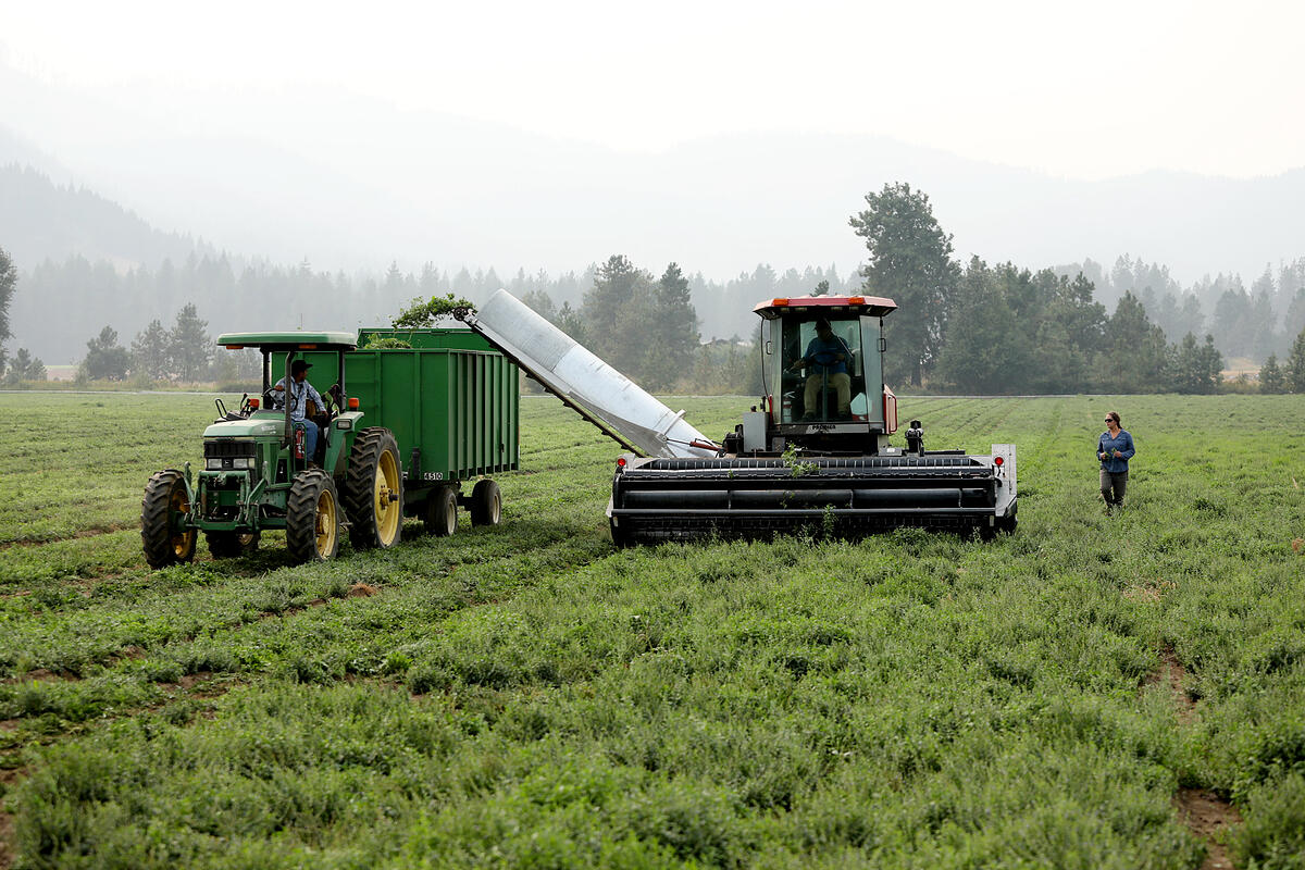 Organic farmers bringing in an herb harvest using a harvester and a trailer pulled by a tractor.