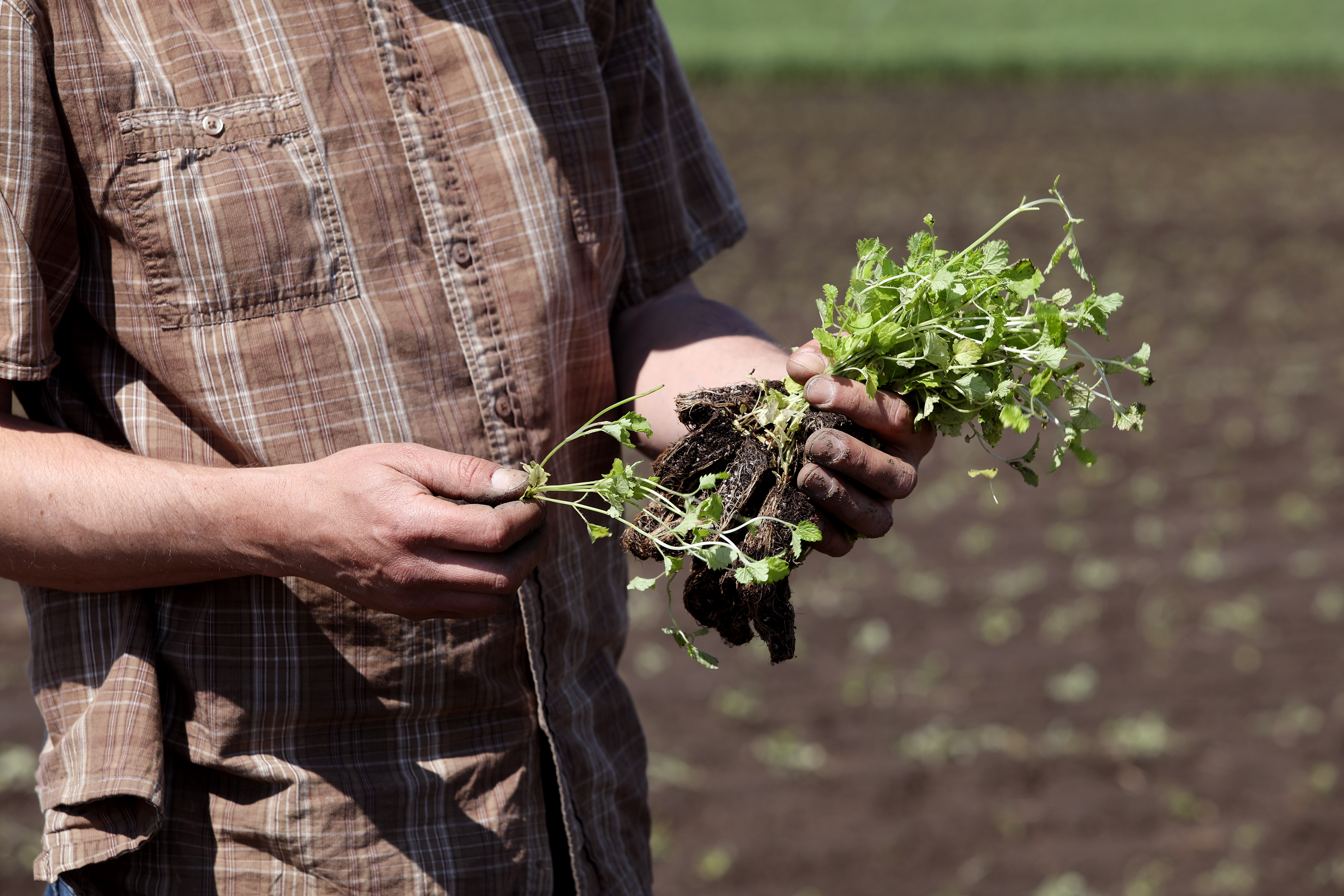 Rustic farm hands holding a living plant with soil still attached.