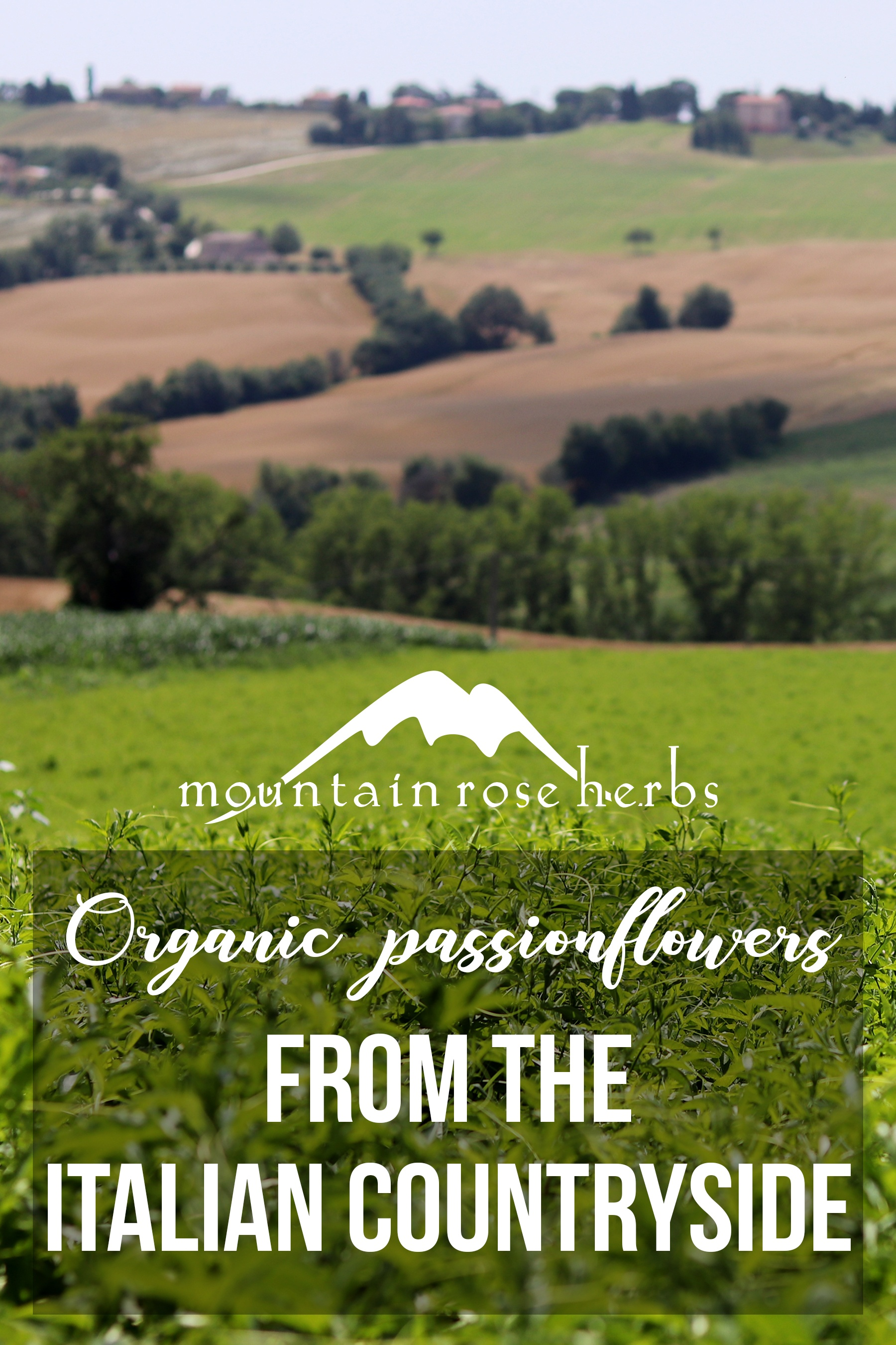 Pin for Organic Passionflowers from the Italian countryside