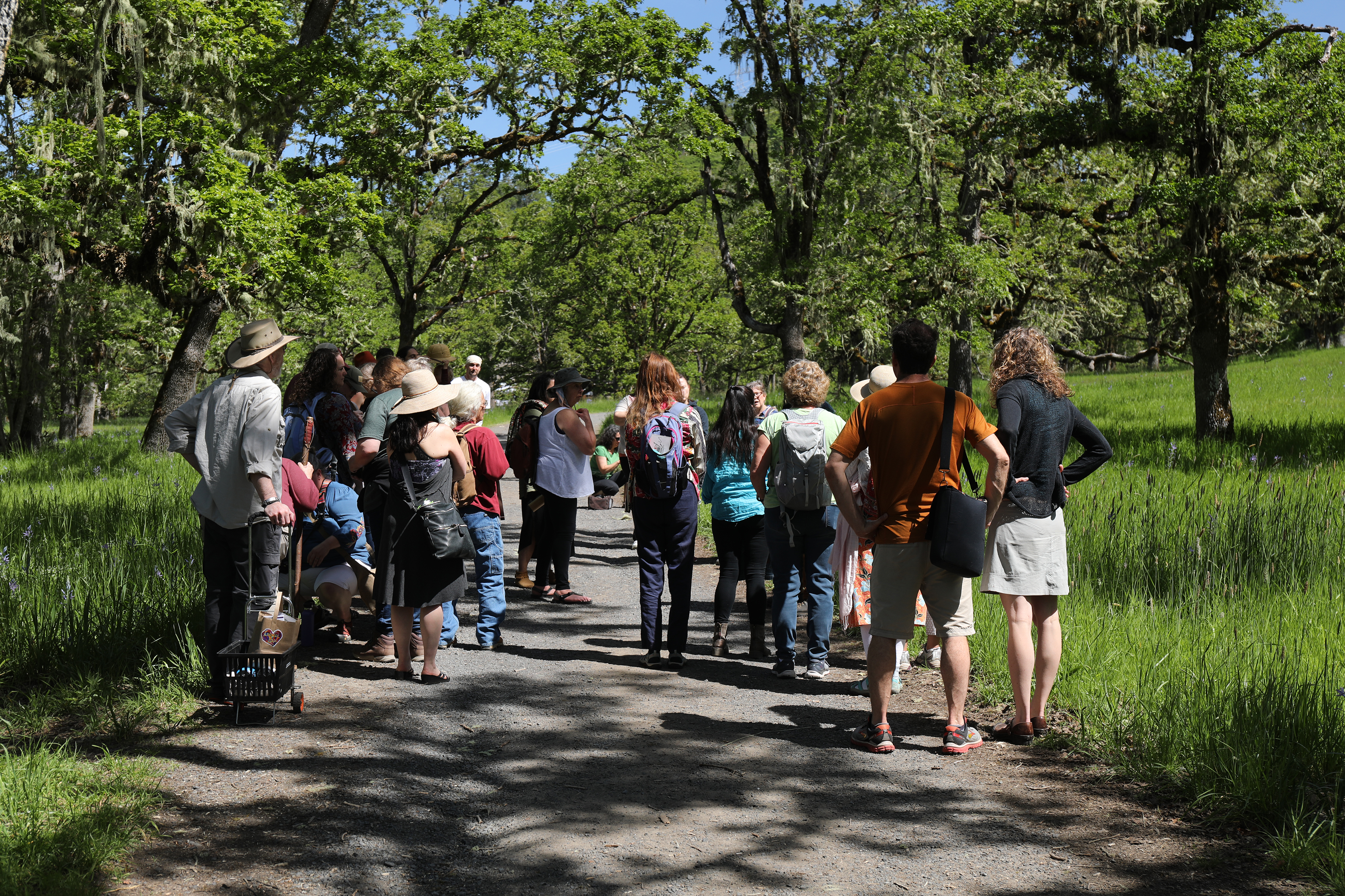 Educational plant walks are hosted by professional botanists to help people understand how to identify the beneficial herbs growing in the wild.