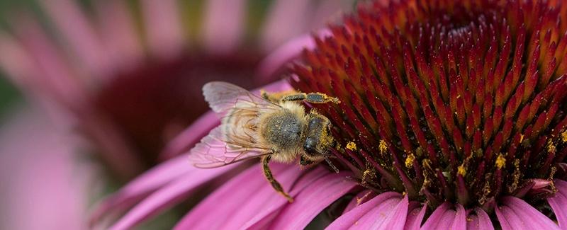 Pollinators_FeaturedImage.jpg