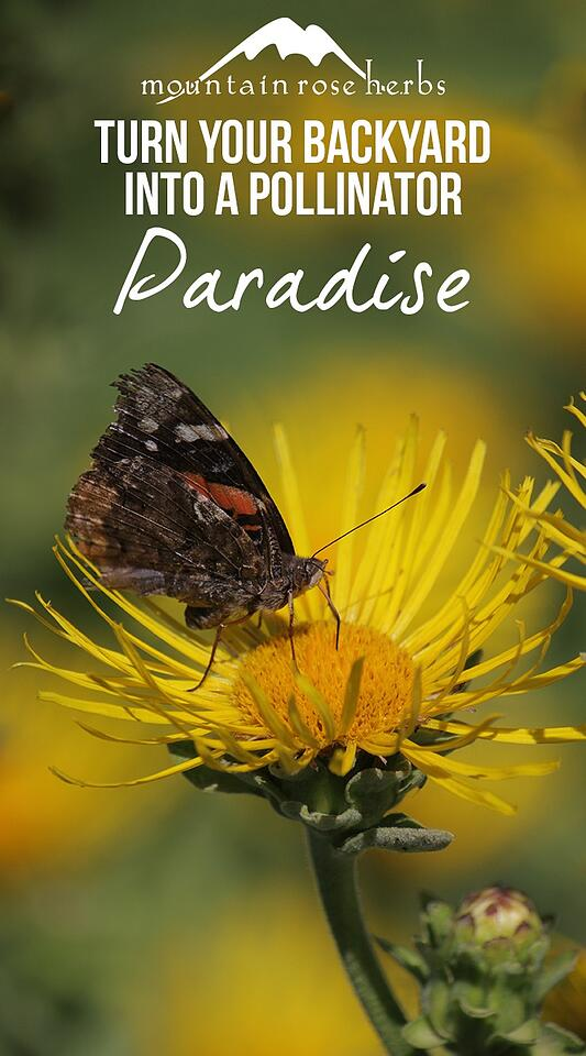 Turn Your Backyard Into A Pollinator Paradise Butterfly Pin
