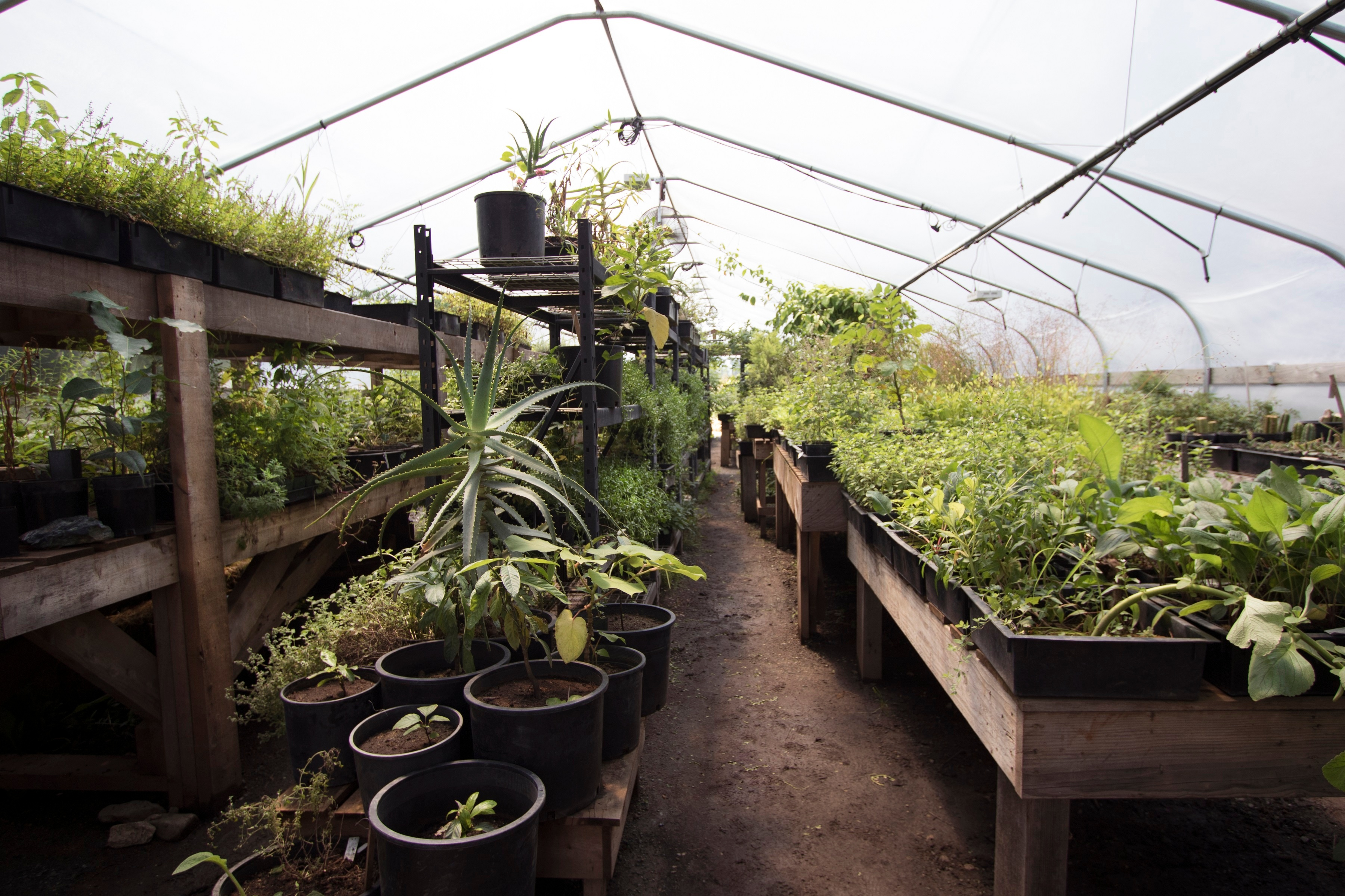 Inside Richo's Greenhouse with Garden Beds and Pots