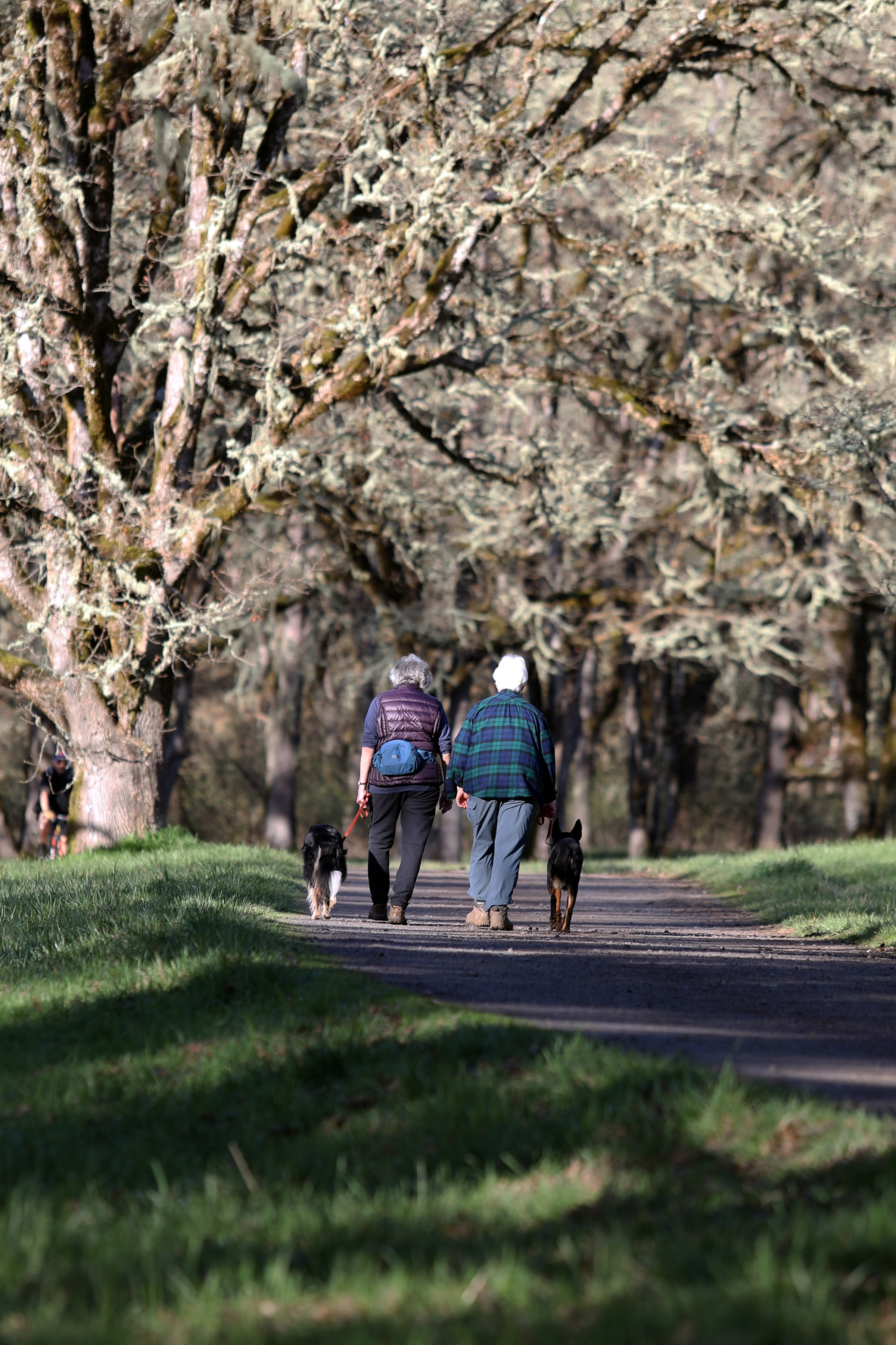 Two people walking on road with their dogs on paved road under trees and next to grassy fields