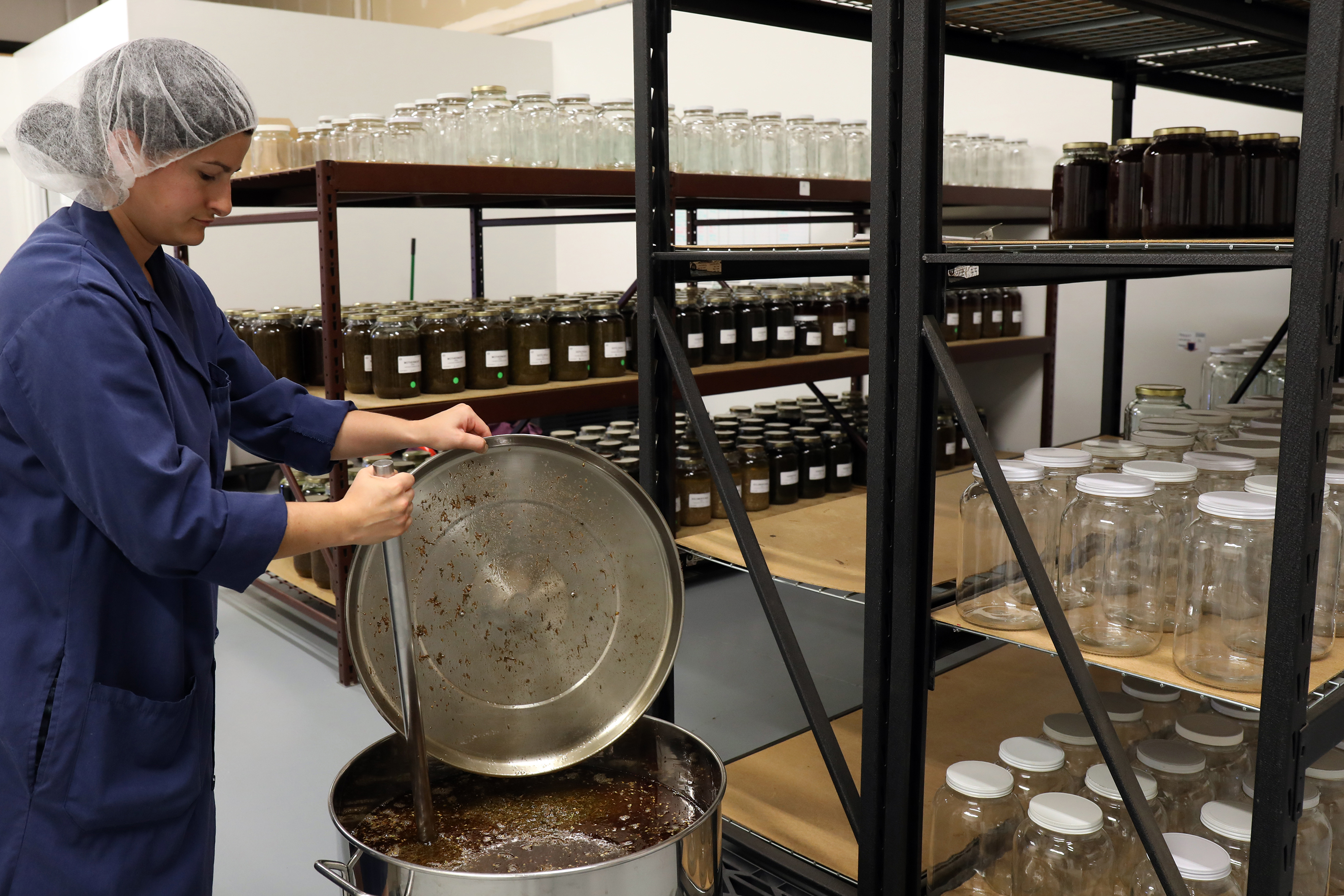 A picture of Shay at work mixing a batch of herbal elixir in the production line of Mountain Rose Herbs. She is standing among several shelves of large glass jars, some empty, some containing herbal infusions.