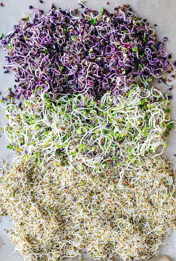 A variety of sprouted seeds ranging in color from pale to vibrantly purple.