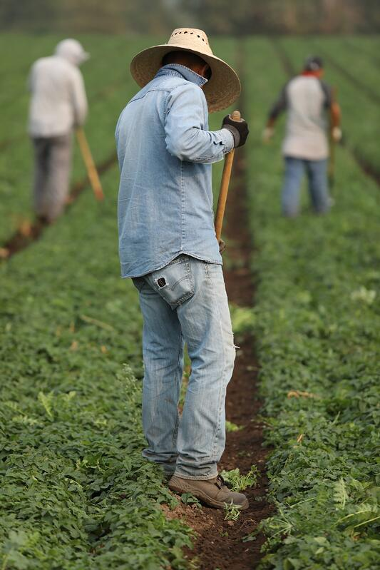 Farmer wearing denim standing with rake out on green farm with other farmers