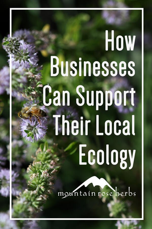 Our Bioswale and Rain Garden Pinterest pin for Mountain Rose Herbs